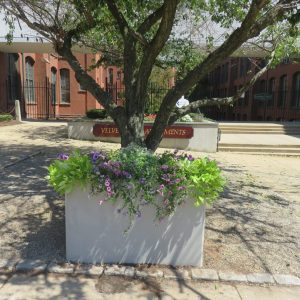 Outdoor Rectangular Concrete Planter